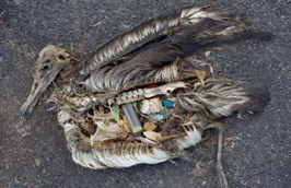 Consultant sought for marine plastic litter assignment